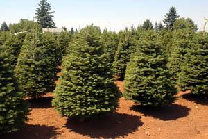 hm image trees
